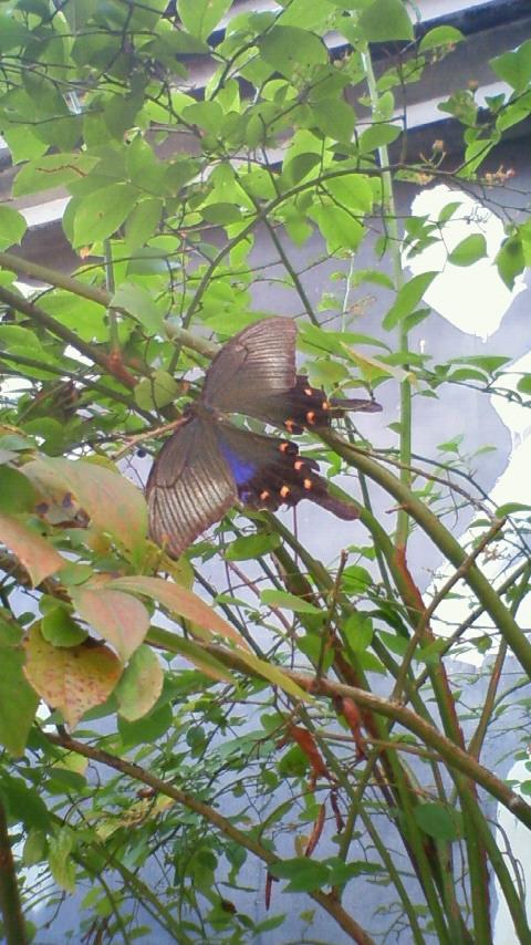 今までに見たことのない蝶々